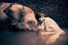 #elephant #ganesha