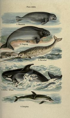 The handy natural history, - Biodiversity Heritage Library. http://biodiversitylibrary.org/page/21416695. #WorldOceansDay