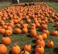 10 Kentucky Orchards to Visit This Fall, Kentucky - Kentucky Tourism