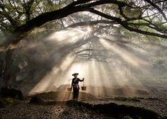 Millennia old Banyan Tree - yang ja xi, Fujian