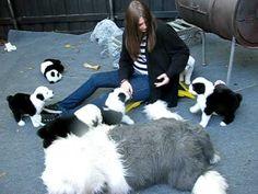 Farmer live-tweets the birth of ten adorable sheepdog puppies ...