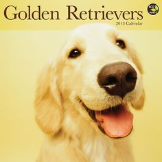 Golden Retrievers Wall Calendar: See why Golden Retrievers are one of the most popular dog breeds in this calendar. Each month presents a new, loyal, fun-loving family-favorite companion.  http://www.calendars.com/Golden-Retrievers/Golden-Retrievers-2013-Wall-Calendar/prod201300002520/?categoryId=cat10081=cat10081