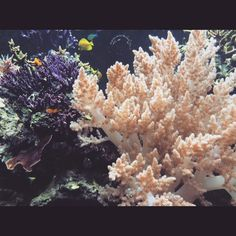 K Harv  @misskpeach Some cool coral a...Instagram photo | Websta (Webstagram)