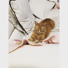 くつろいでますね〜🐱🍥 余熱あるからベッド来てくれへん( ;ᵕ; ) … #猫 #ねこ #ネコ #茶トラ #愛猫 #猫好き #cat #cats #とんちゃん #うちの子 #ペット #家族 #動物 #どうぶつ #大好き #仲良し #🐱 #にゃんすたぐらむ #catstagram_japan #ねこ部 #猫部