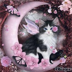 So many cute kittens videos compilation 2019 Animals And Pets, Baby Animals, Cute Animals, Cute Cats And Kittens, Kittens Cutest, Elfen Fantasy, Cute Animal Drawings, Cat Wallpaper, Beautiful Cats