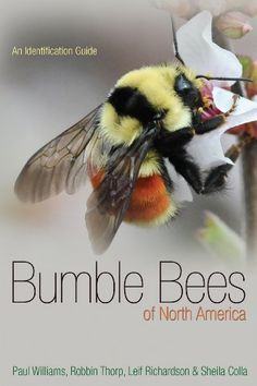 Buy Bumble Bees of North America An Identification Guide: NHBS - Paul W Williams, Robbin W Thorp, Leif Richardson, Sheila Colla, Princeton University Press Bee Life Cycle, Bee Supplies, I Love Bees, Bees And Wasps, Busy Bee, Save The Bees, Bee Happy, Bees Knees, Field Guide