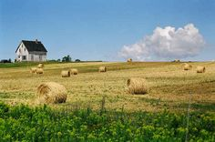 The farmlands of Prince Edward Island.