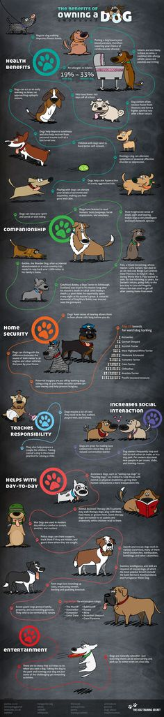 INFOGRAPHIC: 38 BENEFITS OF OWNING A DOG
