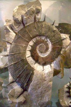 Steinkern.de - Die Fossilien-Community - Fossils on Majorca – the collection José Juárez Ruiz and an excursion to Majorcan Lower Cretaceous