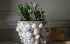 Image result for how to use seashells for decoration in your garden