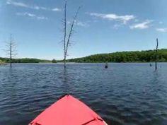 we took a kayaking day trip to Briery Creek Lake, Farmville, VA.