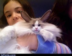 Rabbit Cat!  Click here for more cats that look like other animals http://mycatcentral.com/cats-look-like-animals/