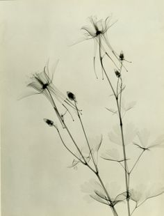Vintage Floral X-Rays Show The True Beauty Of Our Favorite Flowers