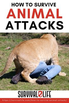 Learn how to survive animal attacks with this guide and live to tell your survival tale! #animalattacks #surviveanimalattacks #survival #preparedness #survivallife Deer Hunting Tattoos, Deer Hunting Decor, Wild Animals Attack, Animal Attack, Survival Life, Survival Skills, Wilderness Survival, Wild Animals Information, Alaska Hunting