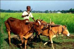 Odisha News :SLBC approves Rs 40,000 cr Annual Credit Plan for Odisha | eOdisha.OrgeOdisha.Org