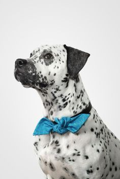 Sometimes you just need some color. Joko, Pitbulls, Cute Animals, Style, Pretty Animals, Swag, Pit Bulls, Cutest Animals, Pitbull