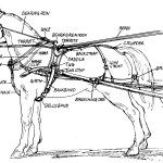 Horse Wagon, Horse Cart, Horse Drawn Wagon, Pretty Horses, Horse Love, Beautiful Horses, Horse Harness, Horse And Buggy, Horse Carriage