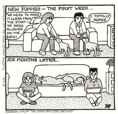 The New Pups--Pretty much how it went at our house!