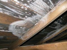 Stadig flere bygg rammes av muggsopp - Tu.no Allergies, Home, Ad Home, Homes, Haus, Houses