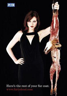 Η ΕΦΗΜΕΡΙΔΑ ΤΩΝ ΣΚΥΛΩΝ: Στοπ στην κακοποίηση για χάρη της γούνας... Ένα γρ...