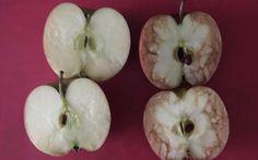 Una profesora explica de manera BRILLANTE cuánto duele el bullying usando solo dos manzanas