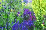 Great Dixter plant combination - vibrant blues and greens
