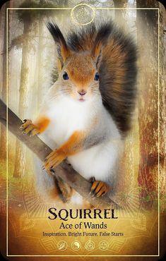 Animal Meanings, Animal Symbolism, Animal Spirit Guides, Spirit Animal, All Tarot Cards, Daily Tarot Reading, Oracle Tarot, Oracle Deck, Tarot Card Meanings