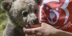 Έκκληση για βοήθεια απευθύνει ο Αρκτούρος - Μηδαμινά τα έσοδα λόγω lockdown   SerresLand.gr Bear, Animals, Animales, Animaux, Bears, Animal, Animais