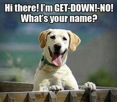That should be my dogs name.  http://melanysguydlines.com  #humor #blogger #funny #animals #dogs