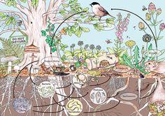 La permacultura es más que la simple imitación de los ecosistemas naturales
