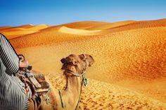 Tunisie - Chameau dans le désert