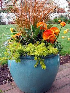 An early Spring container that combines some fun colors and plants. Carex testacea (Orange Sedge) in the middle with some orange Rununculus, 'Angelina' Sedum and some orange Pansies. The turquoise pot really augments the colors int he plants.