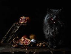 Delicious black cat