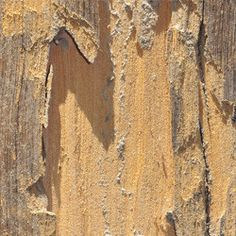 Think you have termites in your Lexington home or business?