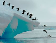 Adelie penguins group dive Photo by Lois Summers (Troutdale, Oregon); Antarctic Peninsula  VIA SMITHSONIANMAG.COM