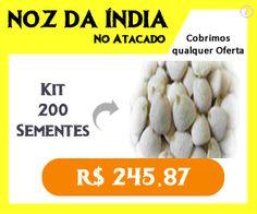 Noz da Índia no Atacado - 200 Sementes por apenas R$ 245,87 | FRETE GRÁTIS | Peça Agora!