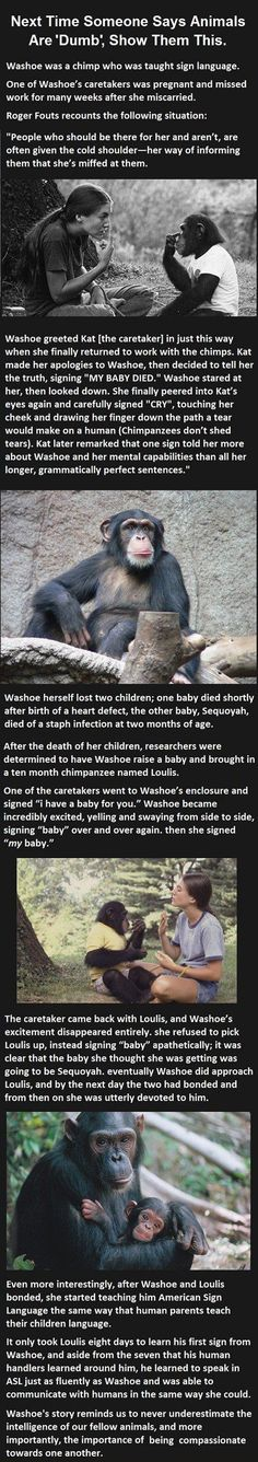 Chimp Shows More Feels Than Some Humans http://ibeebz.com