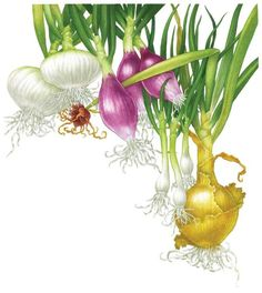 """""""All About Growing Onions"""" Here's a primer on growing onions, leeks, scallions, and shallots, plus information on harvesting, storage, and seed saving techniques. From MOTHER EARTH NEWS"""