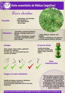 Huile essentielle de Mélèze: propriétés et utilisation sans danger (Abies alba)