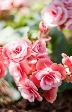 romantic  ,  rose ,  firecracker ,  pink ,  centerpieces ,  Nancy Neil ,  Shell Beach Flowers ,