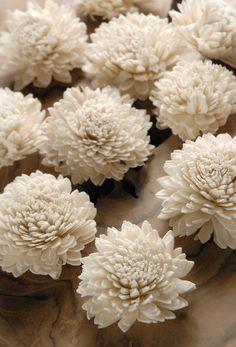 """Sola Shell  2.5""""  Flowers   (12 flowers pkg)  $6  pkg/ 3 pkgs for $5 pkg"""