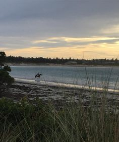 B E A C H  W A L K S //  lovely morning for a walk along our beautiful promenade  beaches not only soothing for humans but also for horses  under a week now!  #beach #walks #live3280 #warrnambool #mayraces2016 #scenic #view #photooftheday #horse #thoroughbred #sunrise #morning by formandfashion
