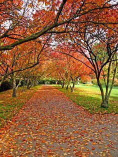 regent's park; london, england