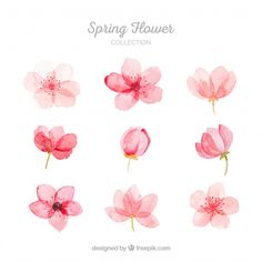 More than a million free vectors, PSD, photos and free icons. More than a million free vectors, PSD, photos and free icons. Exclusive freebies and all graphic resources that you need for your projects Watercolor Flowers Tutorial, Flower Tutorial, Simple Watercolor Flowers, Watercolour Painting, Floral Watercolor, Cherry Blossom Watercolor, Cherry Blossom Art, Pink Painting, Tattoo Watercolor