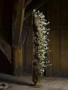 Florale Fotografie 28