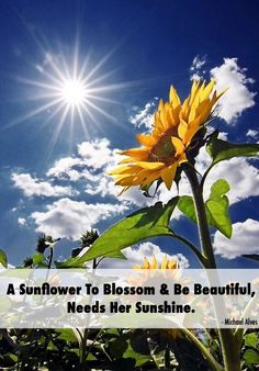 Sunshine Sunflower  Happiness  Beautiful  Sun  Flower  Summer