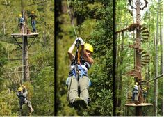 Sonoma Canopy Tours - Zipline the Redwood Forests 6250 Bohemian Hwy Occidental, CA 95465 California Travel, Northern California, Places To Travel, Places To See, Sonoma Valley, Napa Valley, Zipline Adventure, Redwood Forest, Vacation Spots