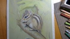Chipmunk Update Chipmunks, My Arts, Make It Yourself, Animals, Animales, Animaux, Animal, Animais, Dieren