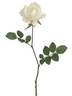 """White Open Rose - 27"""" Tall - with brown on edges"""