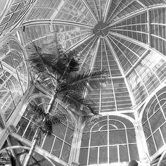 Jardim Botânico de Curitiba, Brasil © Neobat29 #luxosqueoimpériotece #brasil #curitiba #natureza #jardim #jardimbotanico #império #imperivm #imperivmriodejaneiro | Botanical Garden in Curitiba, Brasil © Neobat29 #luxuriesthattheempireweaves #brazil #curitiba #nature #garden #botanicalgarden  #empire #imperivm #imperivmriodejaneiro